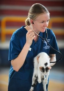 veterinarian advice when you move with pets