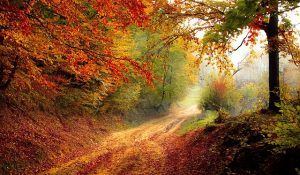 a road in fall