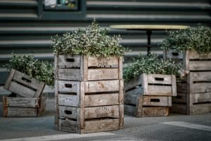 Plants in boxes