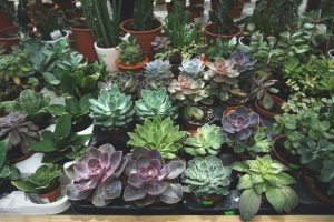 Plants-How to pack plants for moving