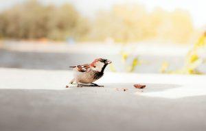 Bird eating crumbs