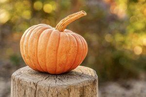 an image of a pumpkin