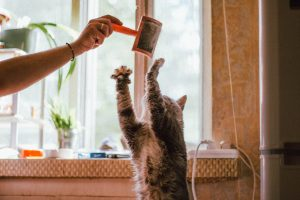 person playing with a cat, holding hairbrush