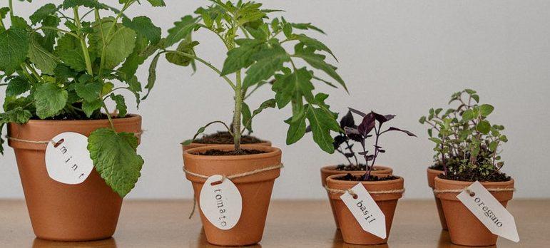 A few potted plants