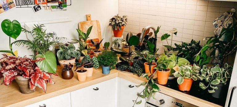 protect your items from the heat during transport such as these plants in the kitchen prepared for the move