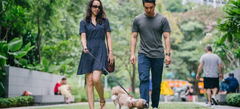 keep yopur pet safe during relocation like this couple taking their dog for a walk in the park